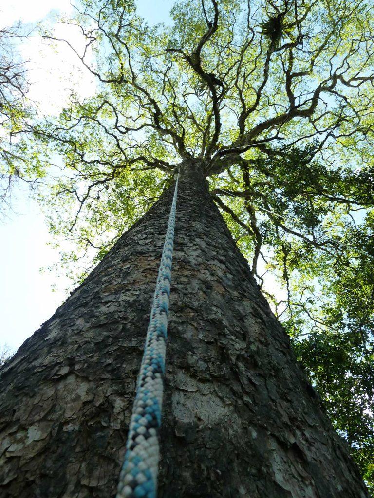 Seil am Baum
